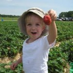 Bennetts Creek Farm Strawberry Picking